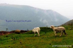 Like sheep...